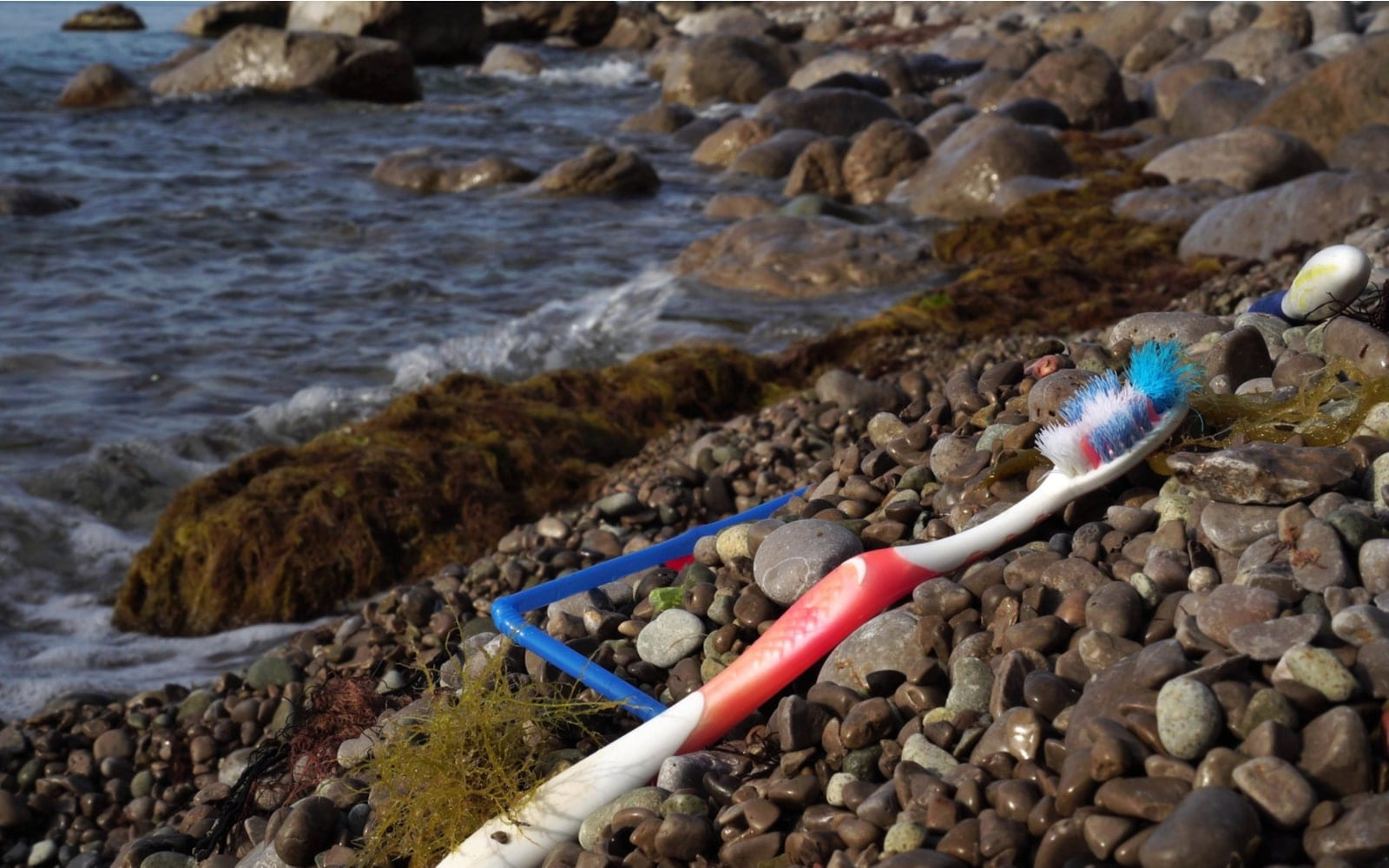 Disposable toothbrush on the shore